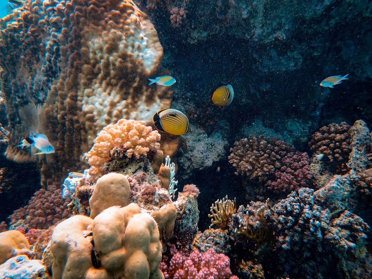 Projeto da Universidade Vila Velha avalia impacto humano no ambiente aquático e educa sobre preservação da água e da vida marinha.